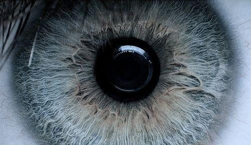 photography, eye, retina - skambenet1 | ello