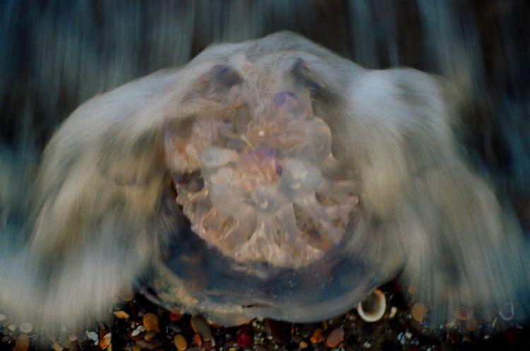closeup, photography, water, movement - ivop | ello