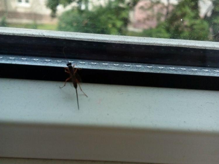 Jurassic Park (micro - photo, insect - igenvoicov | ello