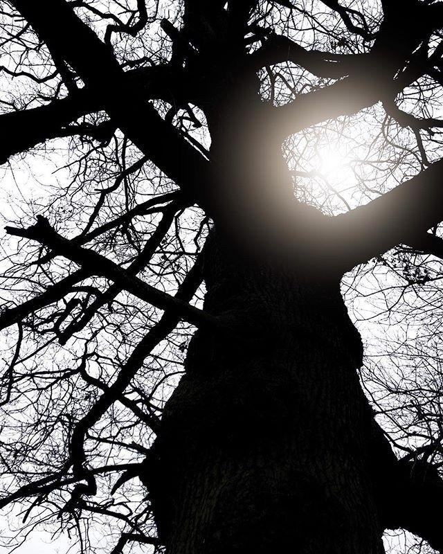 Treelight - Iphone, iphoneography - itsrichardjohnson   ello