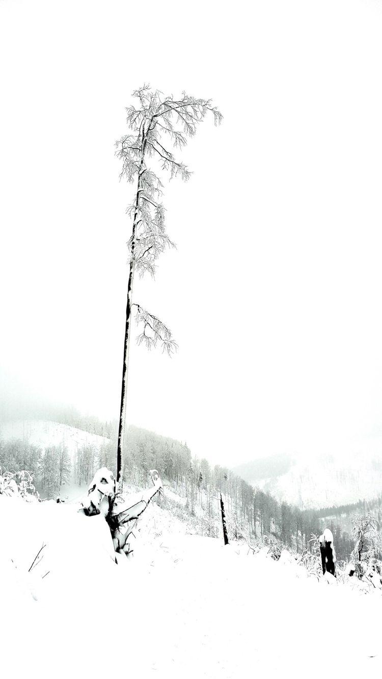 TREE STUDY (2018 - estch | ello