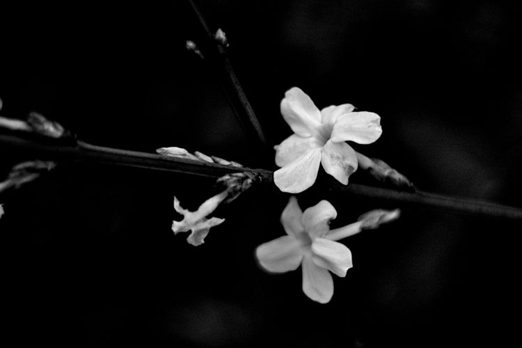 Botanical Monochrome 5999 - flowerphotography - dorian-stretton | ello