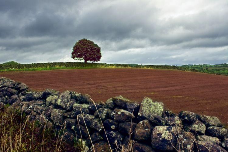 Yorkshire Tree field - shaundunmall | ello