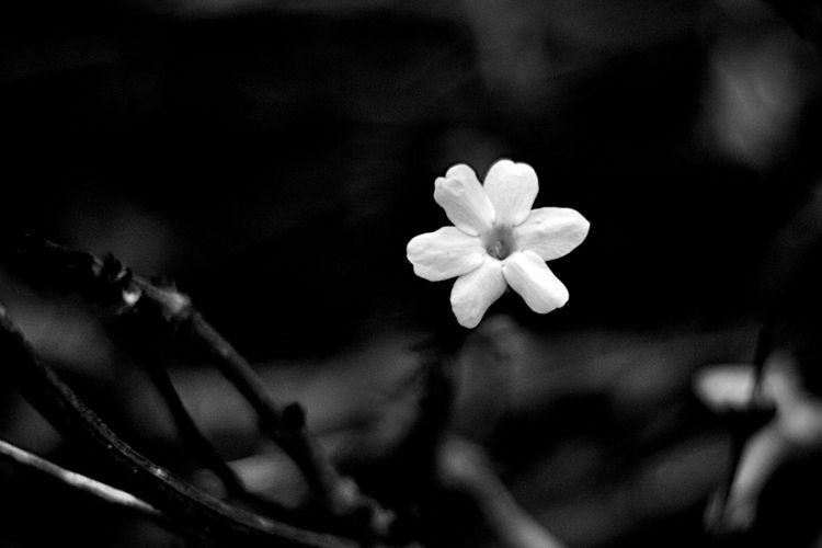 Botanical Monochrome 6002 - flowerphotography - dorian-stretton | ello