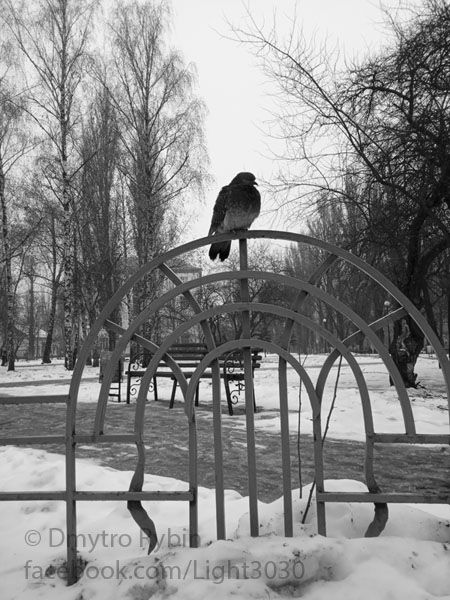 lone pigeon park - fence, lattice - dmytroua | ello