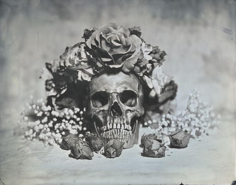 life skull. 8x10, Tintype.  - fineart - thejohnnelson | ello