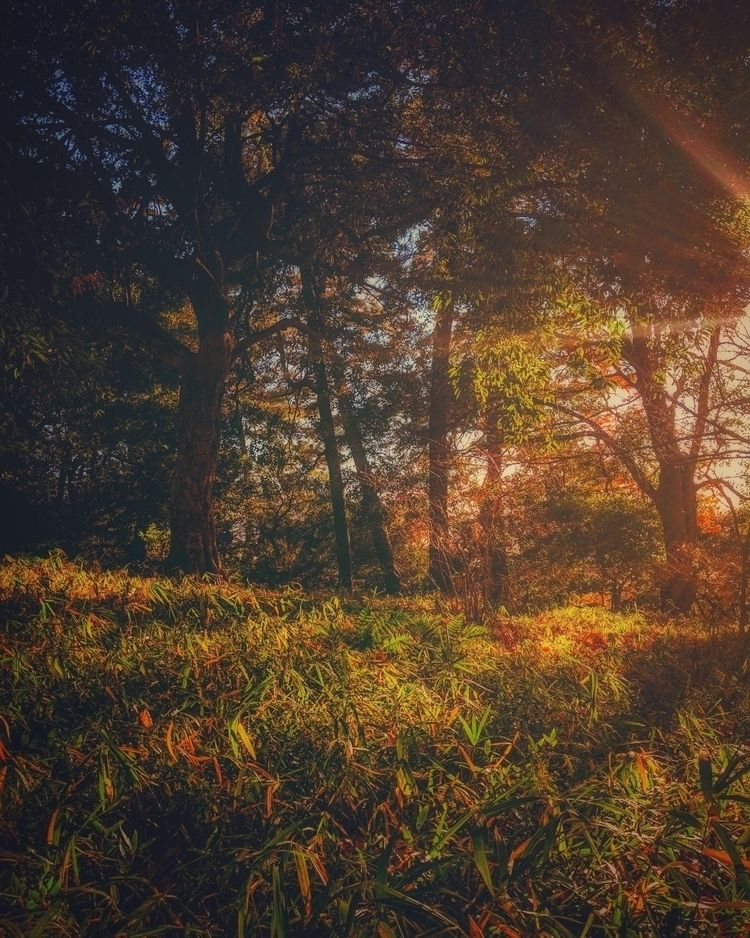 Afternoon sunshine...  - denenchofu - fokality | ello