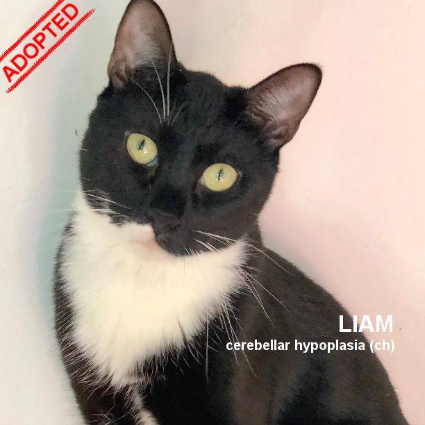 COMMENT SHARE BLACK WHITE) CAT  - snapcats | ello