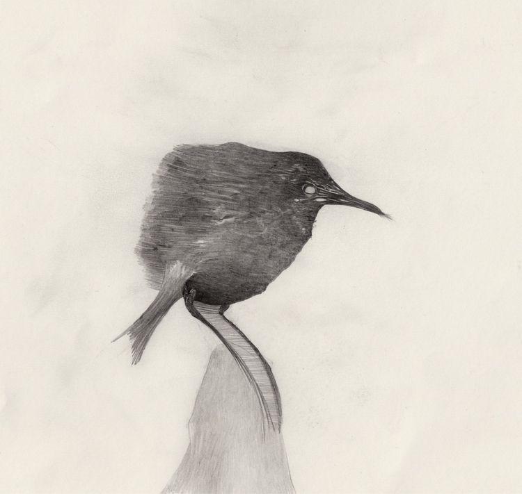 Rage, foolish boulderbird. eyes - littleworries | ello
