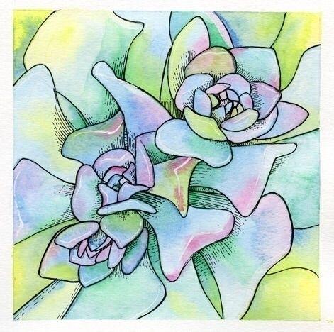 oooold work - watercolor, succulents - terastar | ello