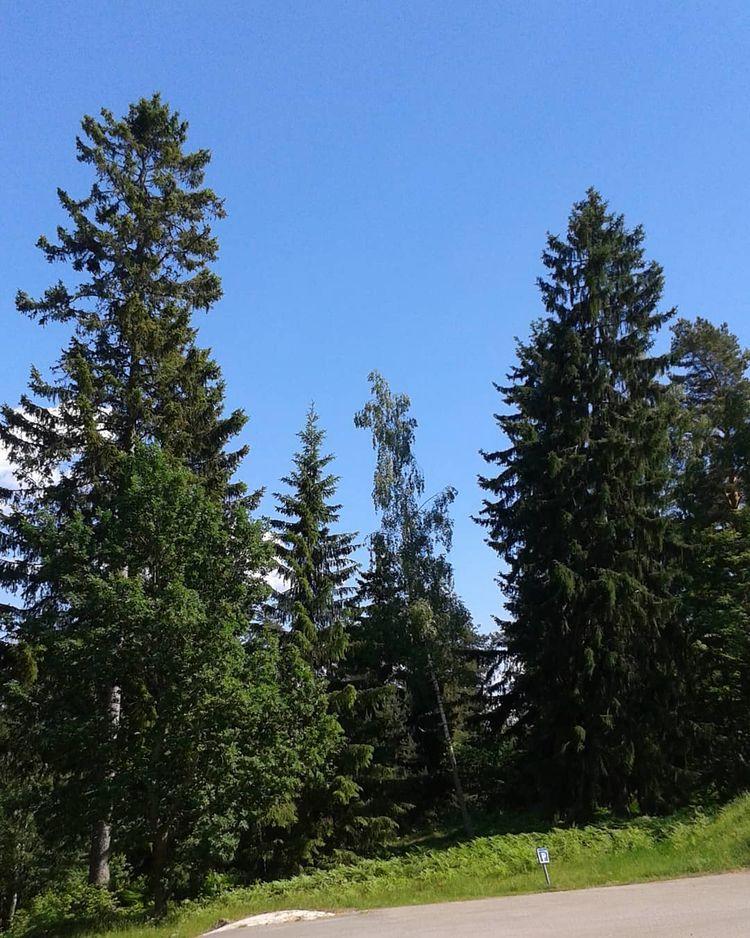 Träd av olika slag ålder samsas - skogskyrkogardar | ello