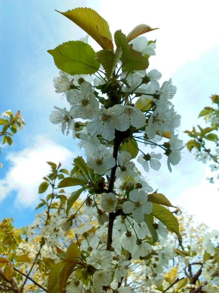 nature, grow, growing, flowers - igenvoicov | ello