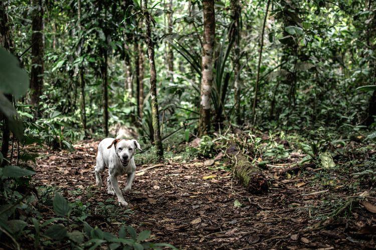 Maelo - nature, dog - davidpinto   ello