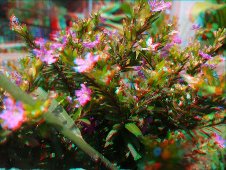 Experimenting red-cyan 3D photo - anand_v_s   ello