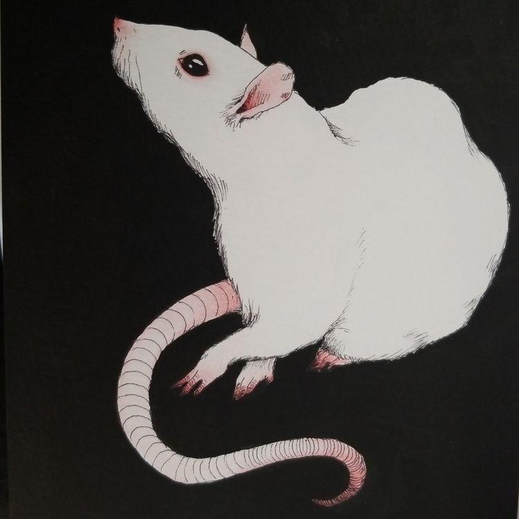 rat bby  - ink, inkdrawing, inking - rkosloskyillustration | ello