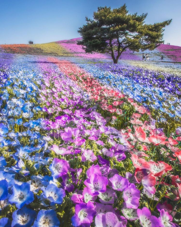 Takahiro Hosoe Captures Beauty  - photogrist | ello