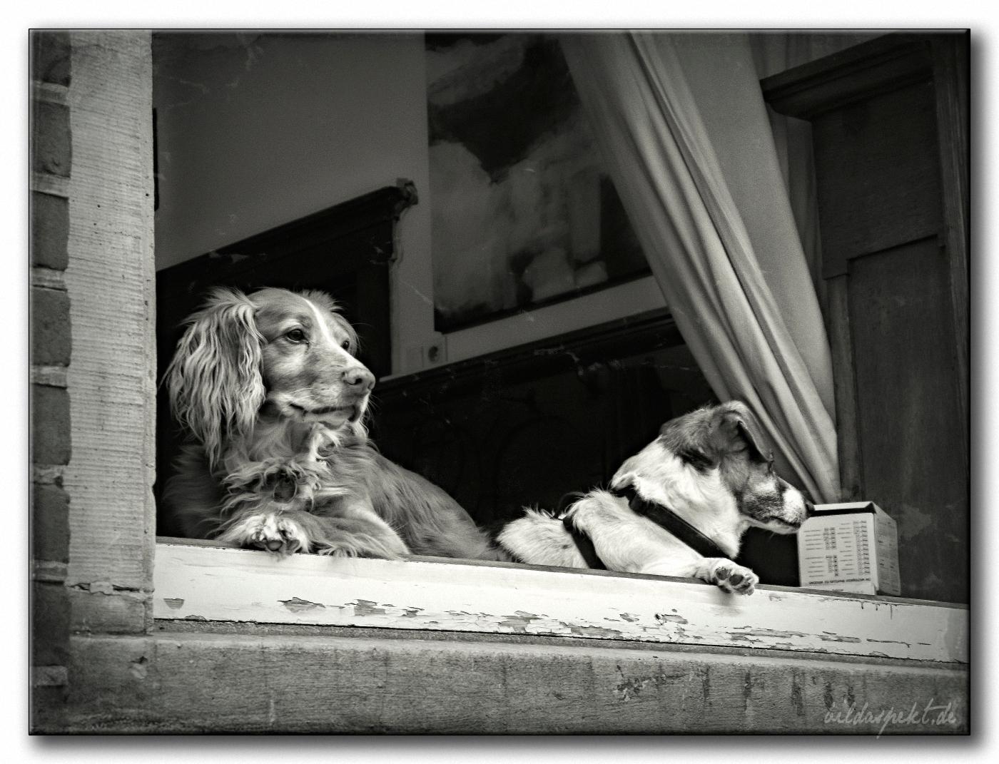 buddies - blackandwhite, bwphotography - bildaspekt   ello