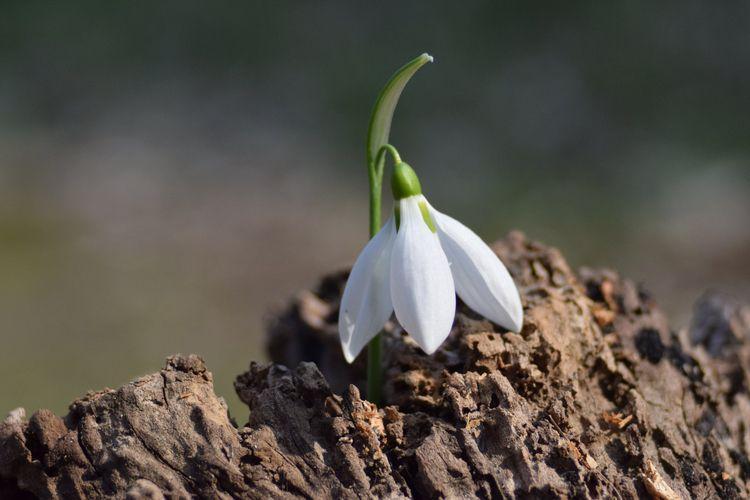 Spring....#nature - flowers, spring - earlyrain | ello
