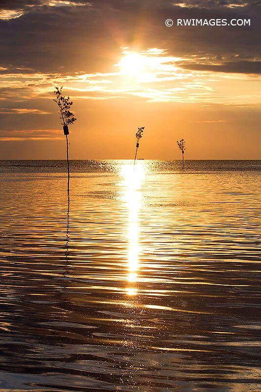 CLAM TREES GOLDEN SUNSET CAPE C - robert-wojtowicz-photography | ello