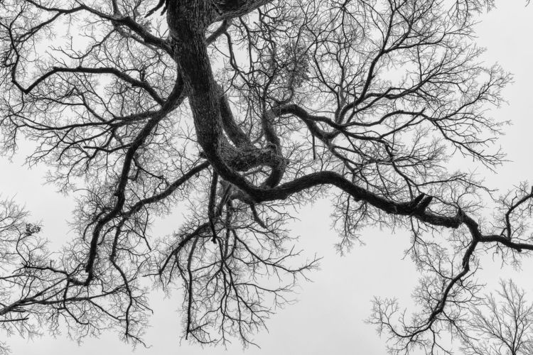 Overreaching tree branches reac - 75centralphotography | ello
