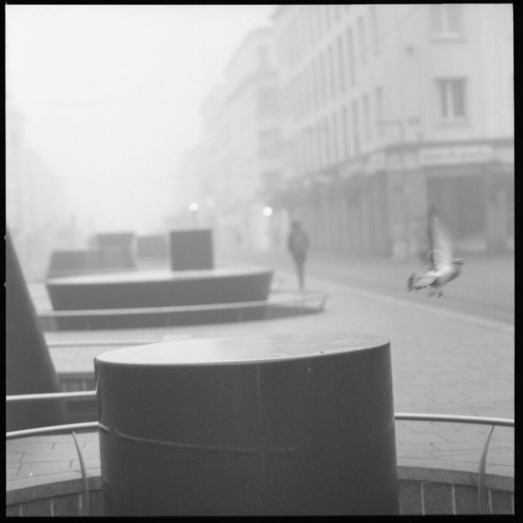 Shapes man pigeon. fog. [Hassel - momac_photo | ello