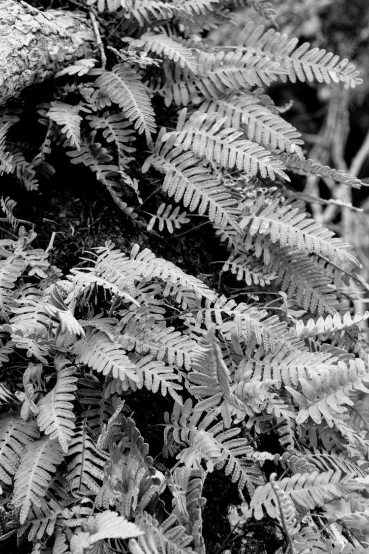 Ferns - findyournola, nolaphotography - twerts | ello