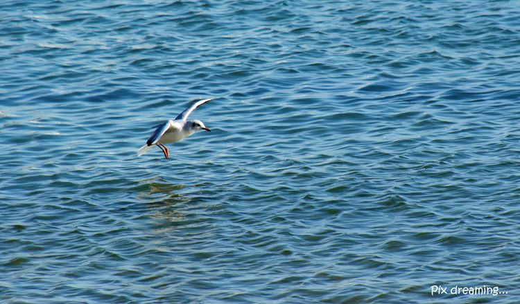 Water landing seagull - photography - pixdreaming | ello
