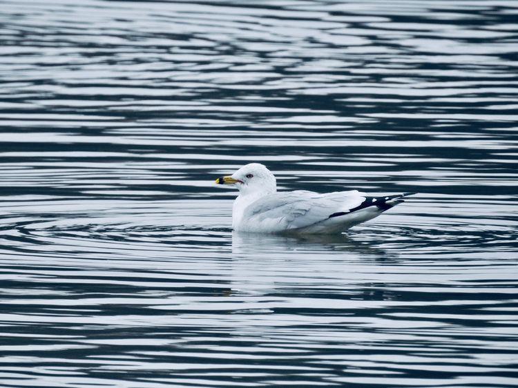 bird water - photography - kgrkz | ello