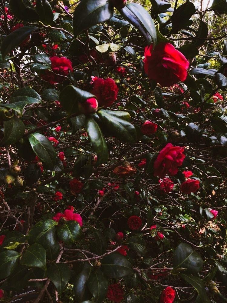 🥀 - ellophotography, flowers, red - saritaphoto | ello