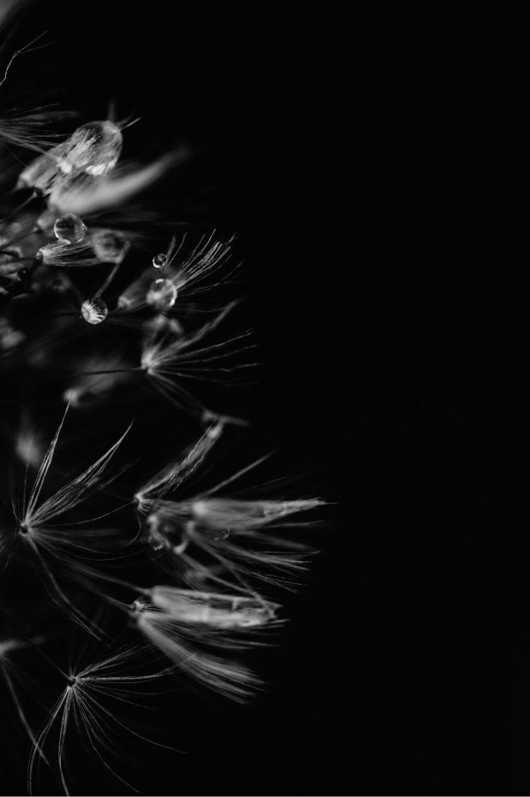 Rainy Wishes.  - macrophotography - jaimeasaro | ello