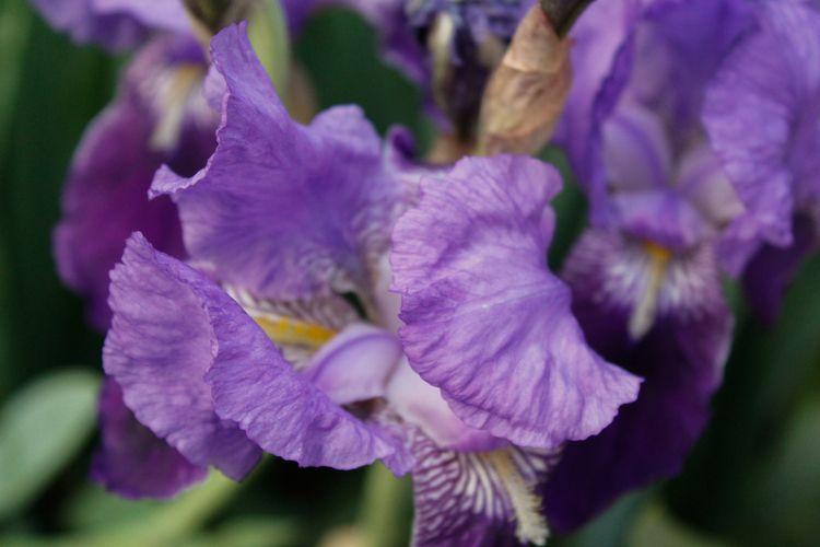 purple Place: Tomelloso, Spain  - jmariagarcia_fotografia | ello