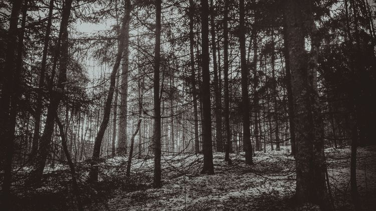 lithuania, dark, blackandwhite - beheroght | ello