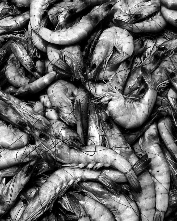 🦐 SlavNovosad.com - worms, foodporn - slavnovosad | ello