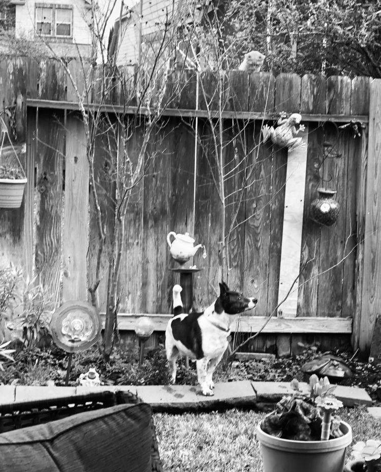 Mischievous cat fence teasing d - dannyme | ello