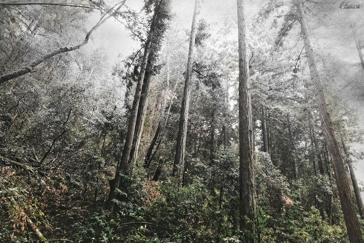altering seasons - robzucho,, photography, - abstractcolorism | ello
