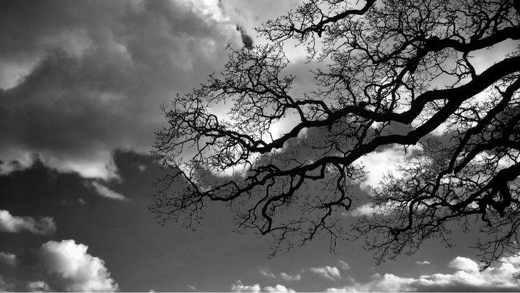 Branches - photography, nature, tree - davidhawkinsweeks | ello