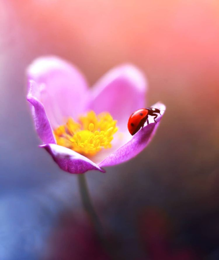Magical Macro Photos Ladybugs F - photogrist   ello