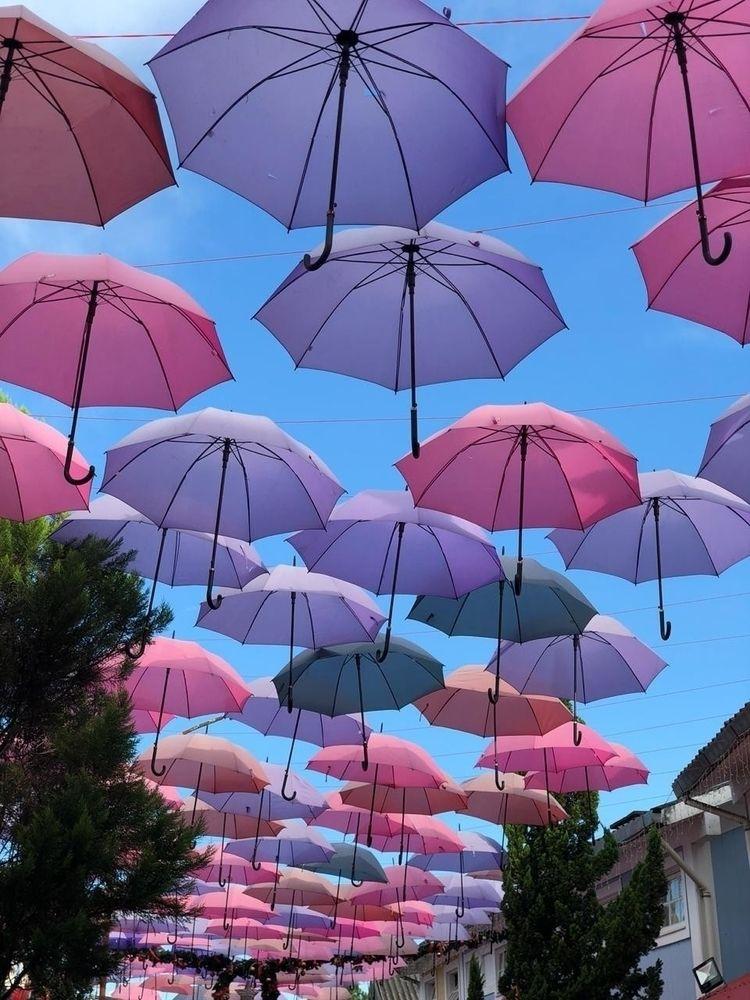 pink purple umbrellas heart fil - thenalligguk   ello