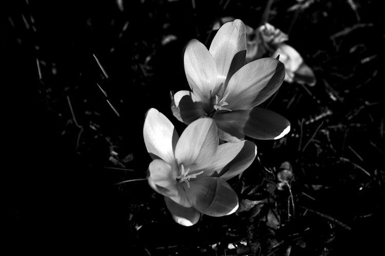 Botanical Monochrome 6336 - flowerphotography - dorian-stretton | ello
