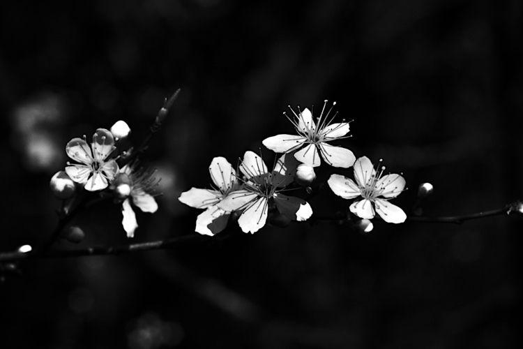 Botanical Monochrome 6338 - flowerphotography - dorian-stretton | ello
