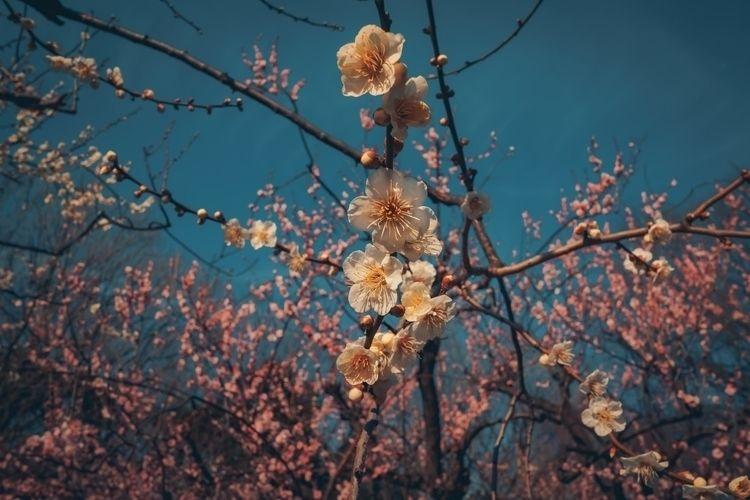 white flowers hiding pink  - tokyo - fokality | ello