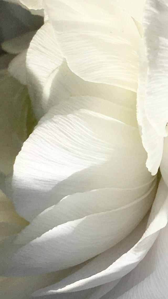 White series - Floraldesign, Flowerphotography - dylanwajichecki | ello