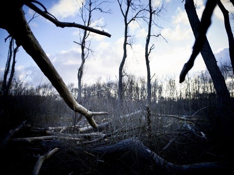 working project forest. view - sjoerd1424   ello