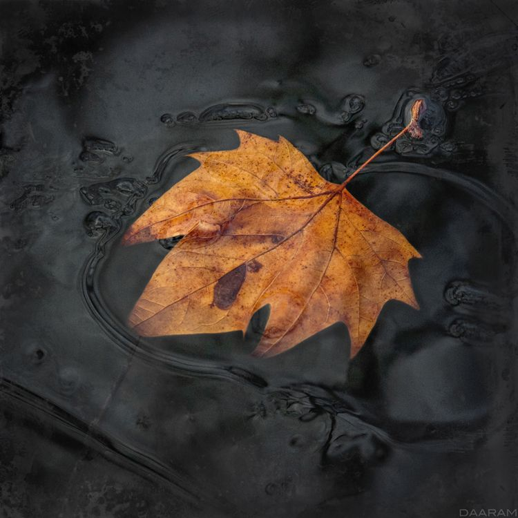 Dark Water: Floating leaf surfa - daaram | ello