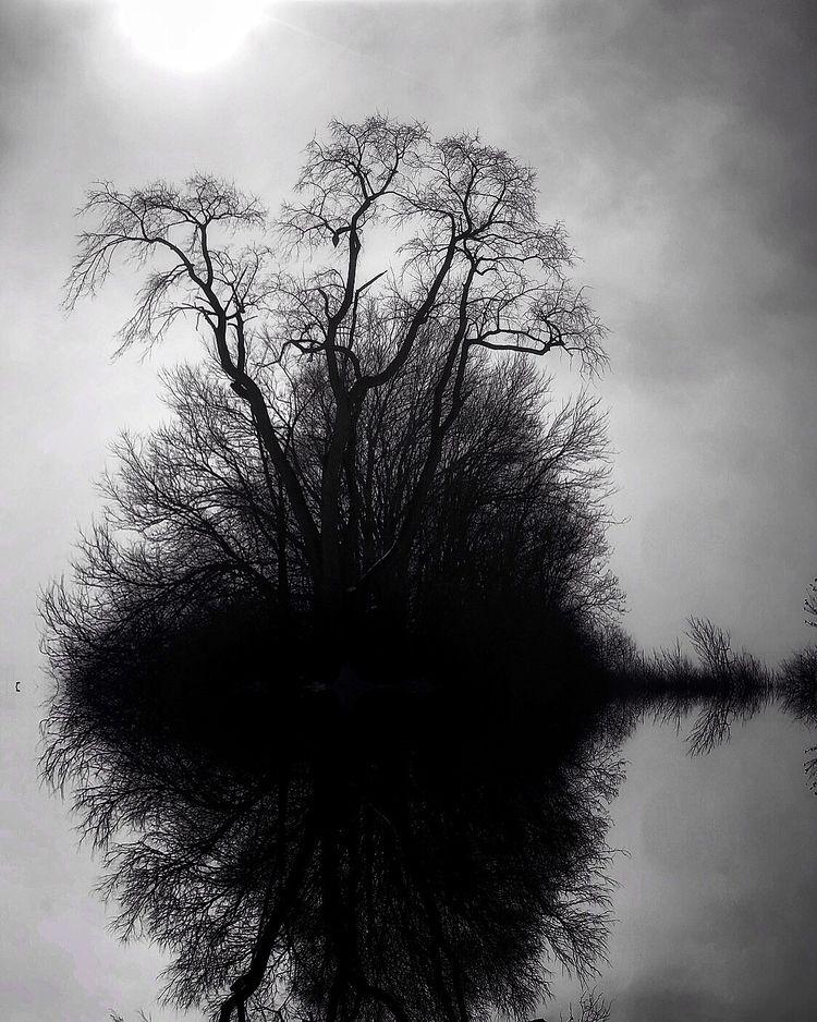 reflection - folker | ello