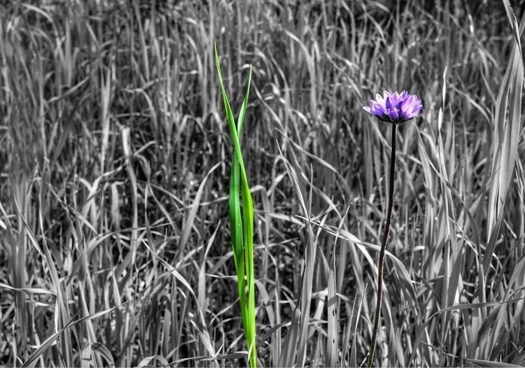 blade grass lens - photography, dslr - d_nodave | ello