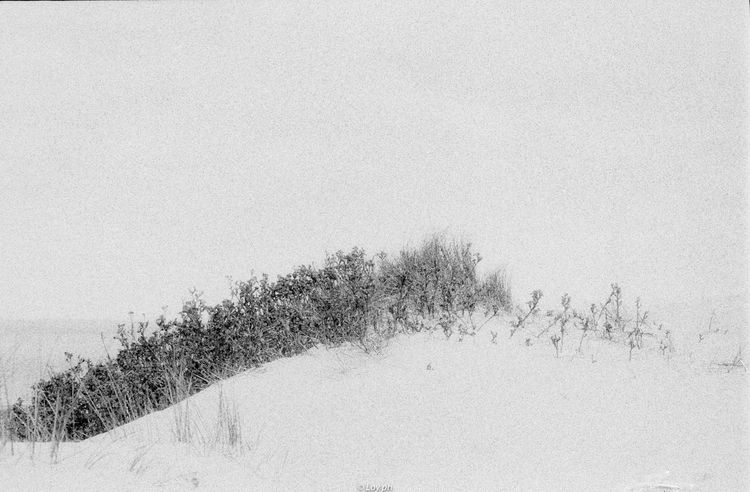 film, 35mm, photography, blackwhite - loyph | ello