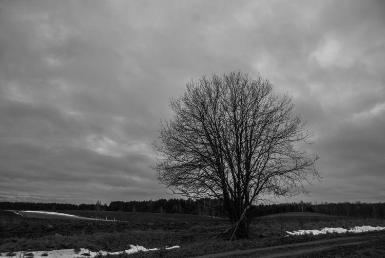 lithuania, lietuva, field, blackmetal - beheroght | ello