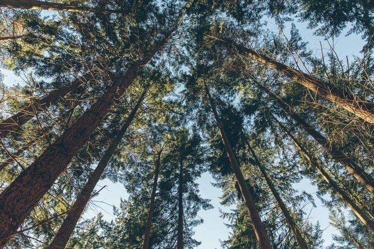 Lithuanian Forest - Klaipėda - Photography - d_edmondson | ello