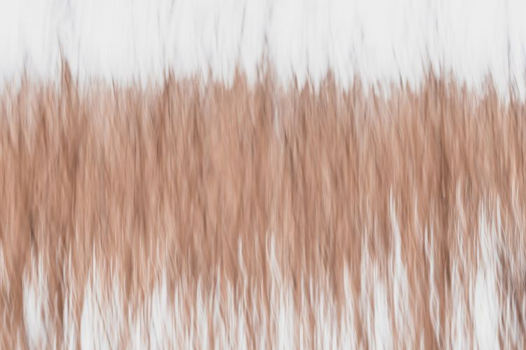 shake, reed, minimalistic, abstract - ppahka | ello